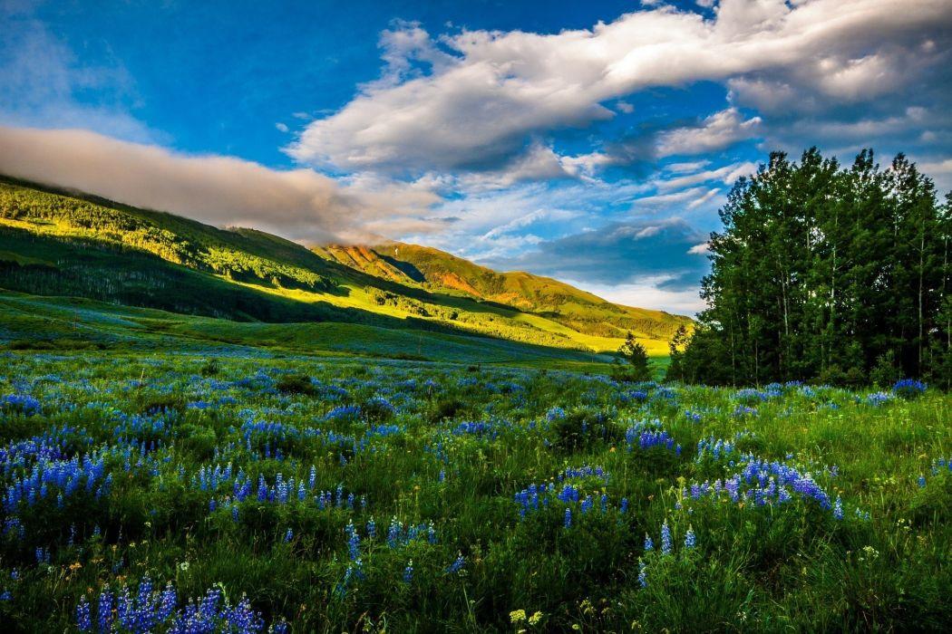 mountains meadows flowers wallpaper