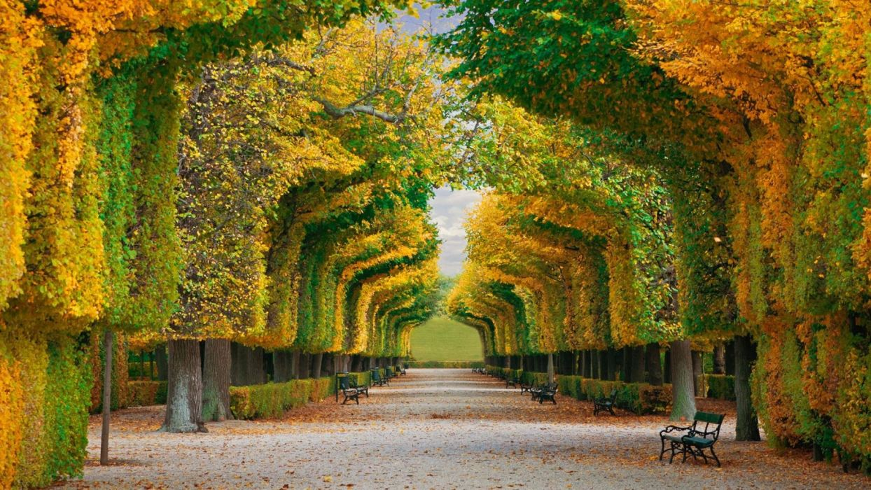 nature walkway trees benches wallpaper