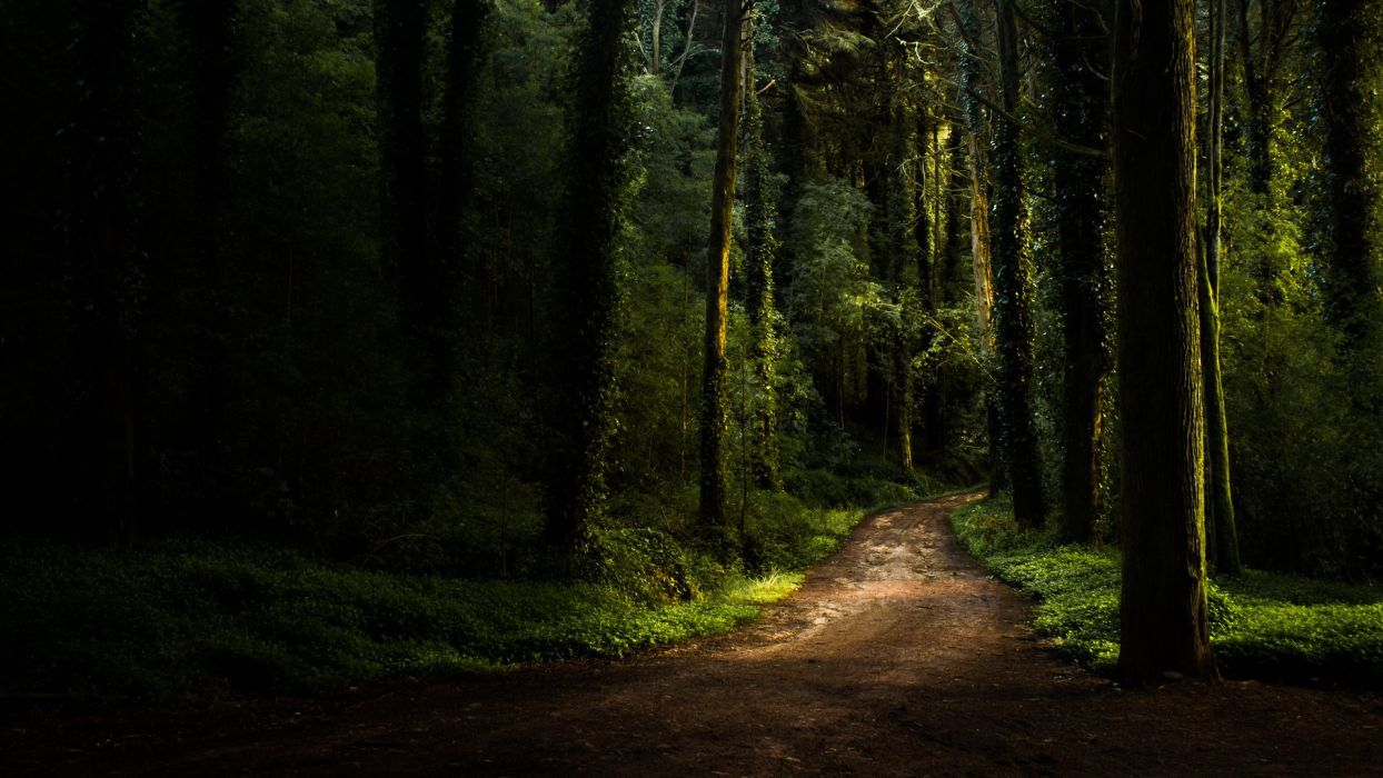 road summer forest wallpaper