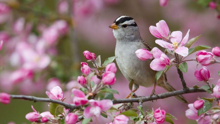 flower bird wallpaper