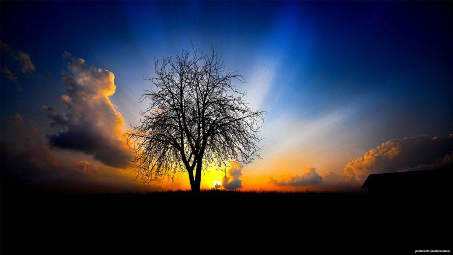 tree sky sunset wallpaper