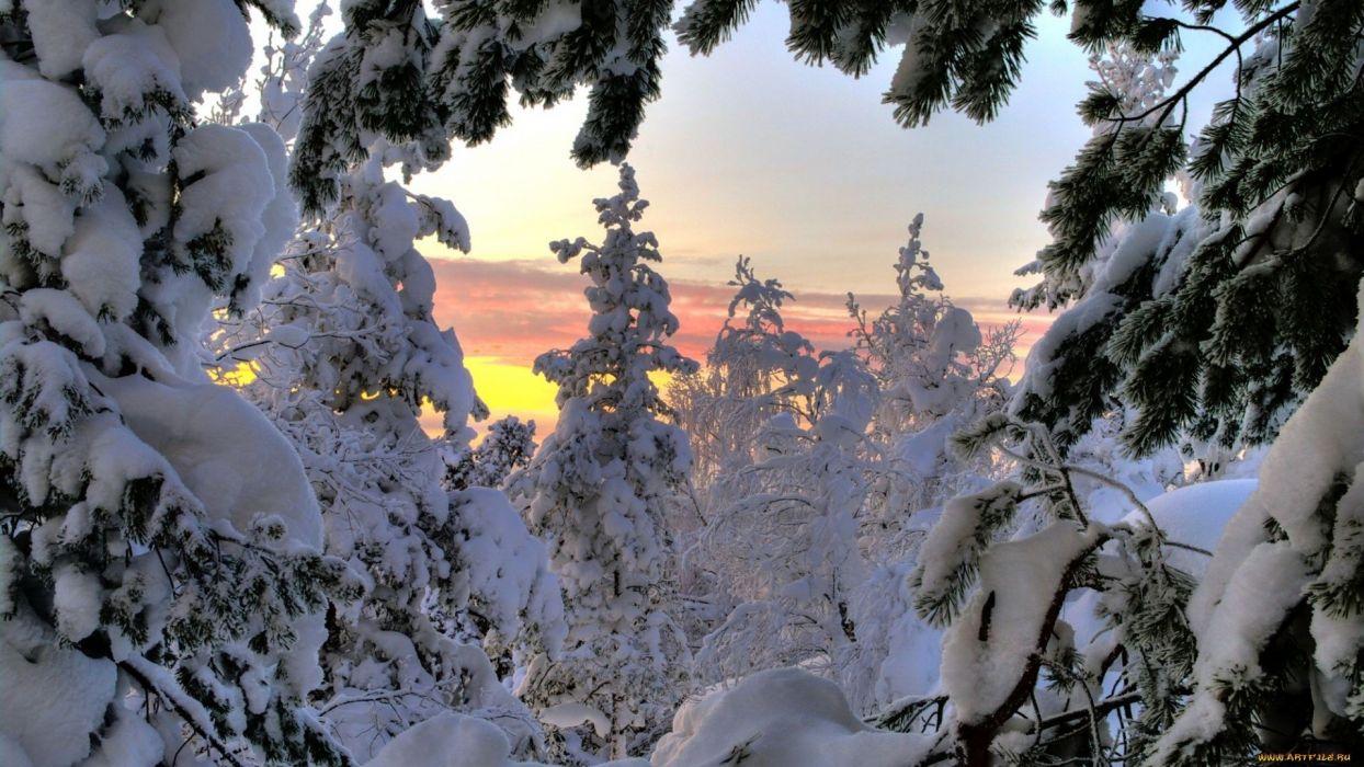 winter tree snow forest wallpaper