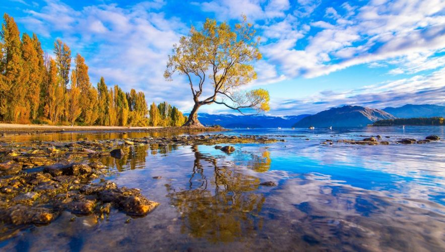 Tree lake water reflection rocks forest mountains wallpaper
