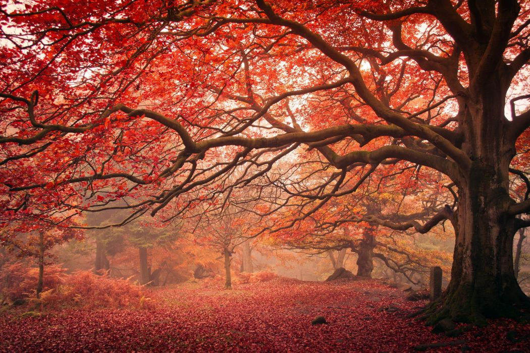 Autumn Branches Trees Trunk tree Nature wallpaper