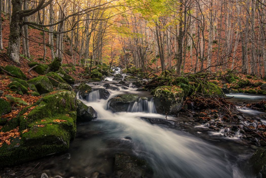 Forest Stones Stream Moss Nature river wallpaper