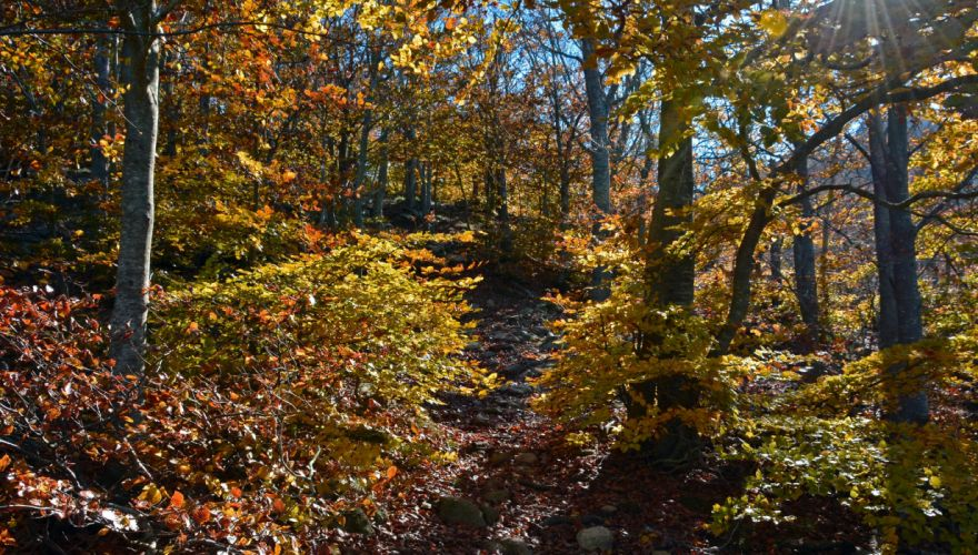 Forests Autumn Trees Foliage Nature wallpaper