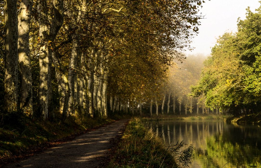 France Rivers Trees Castelnaudary Nature wallpaper