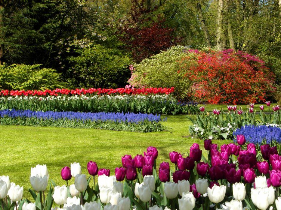 Netherlands Parks Tulips Lawn Shrubs Keukenhof Nature wallpaper