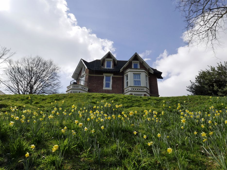 Houses Daffodils Grass Nature wallpaper