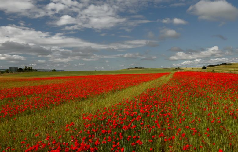 Fields Poppies Sky Italy Nature wallpaper