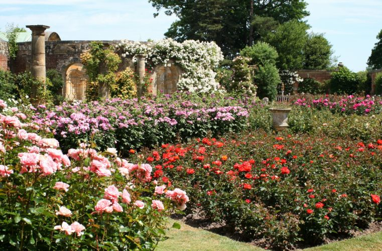England Gardens Roses Hever Castle Gardens Nature wallpaper