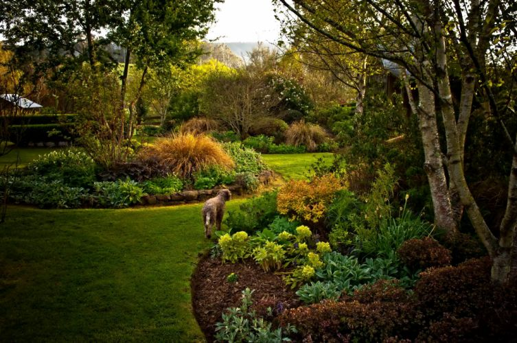Gardens Dogs Lawn Trees Nature wallpaper