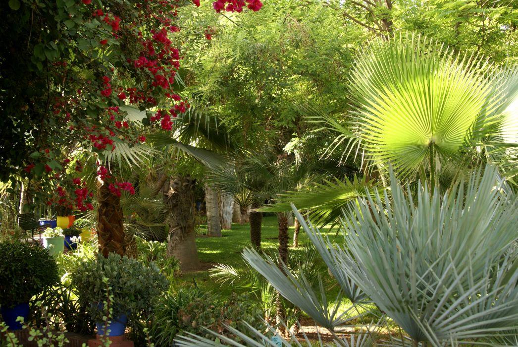 Morocco Gardens Trees Palma Jardin Majorelle Marrakech Nature wallpaper
