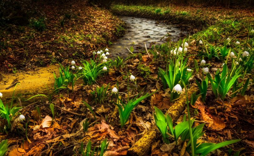 Spring Lilies of the valley Stream Nature Flowers wallpaper