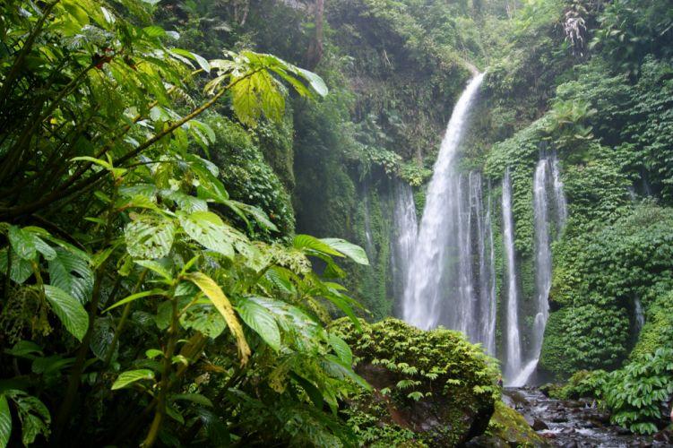 Tropics Forests Waterfalls Jungle Nature wallpaper