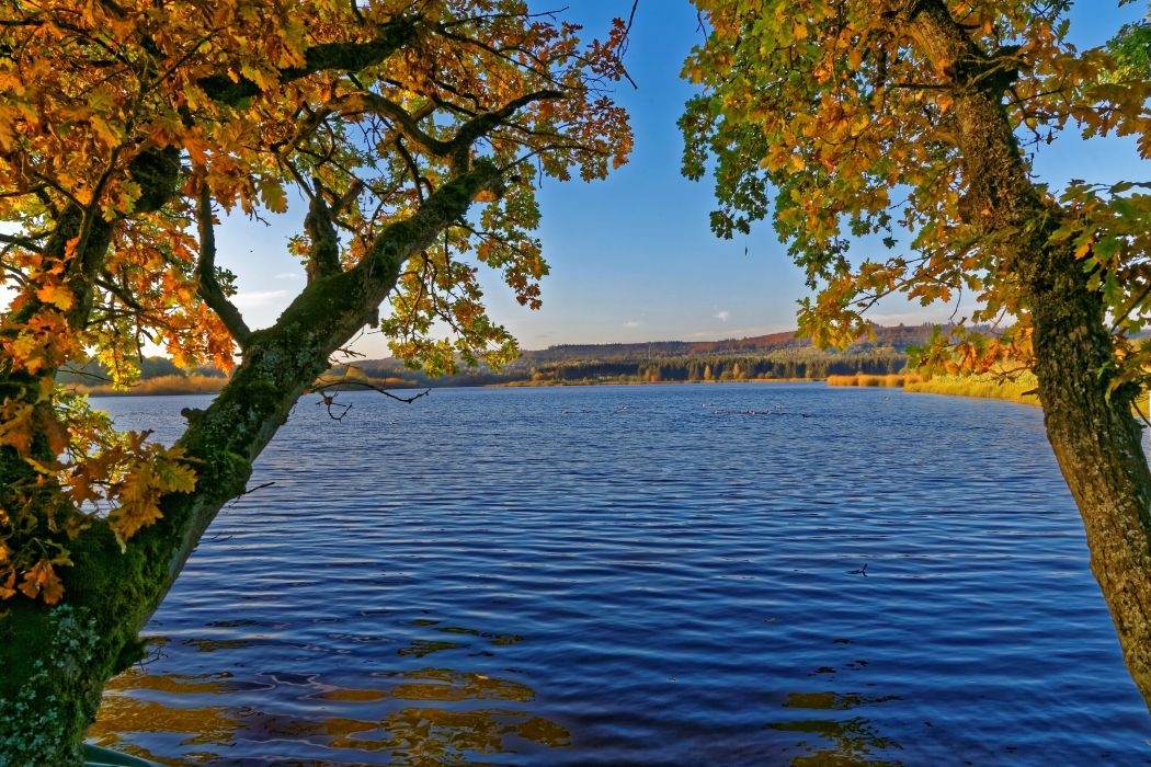 Germany Rivers Autumn Trunk tree Moss Ulmen Nature wallpaper