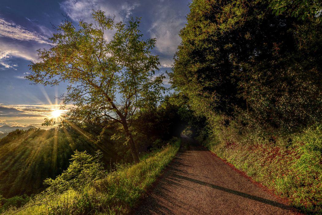 Roads Trees Rays of light Nature wallpaper