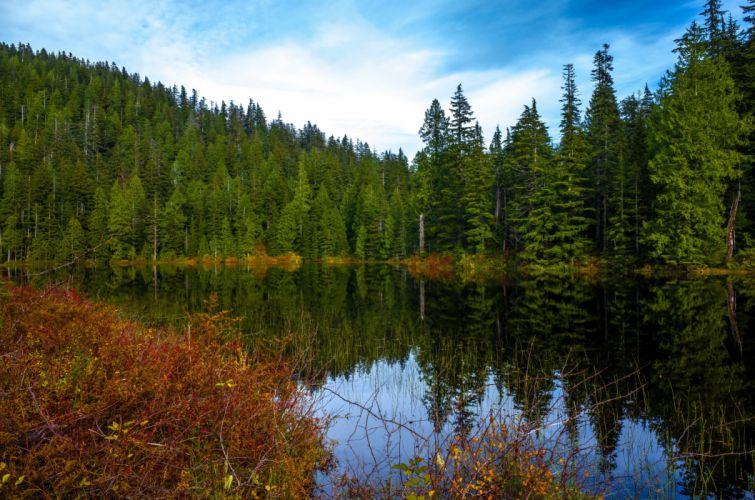 USA Lake Forests Fir Ashland Lakes Nature wallpaper