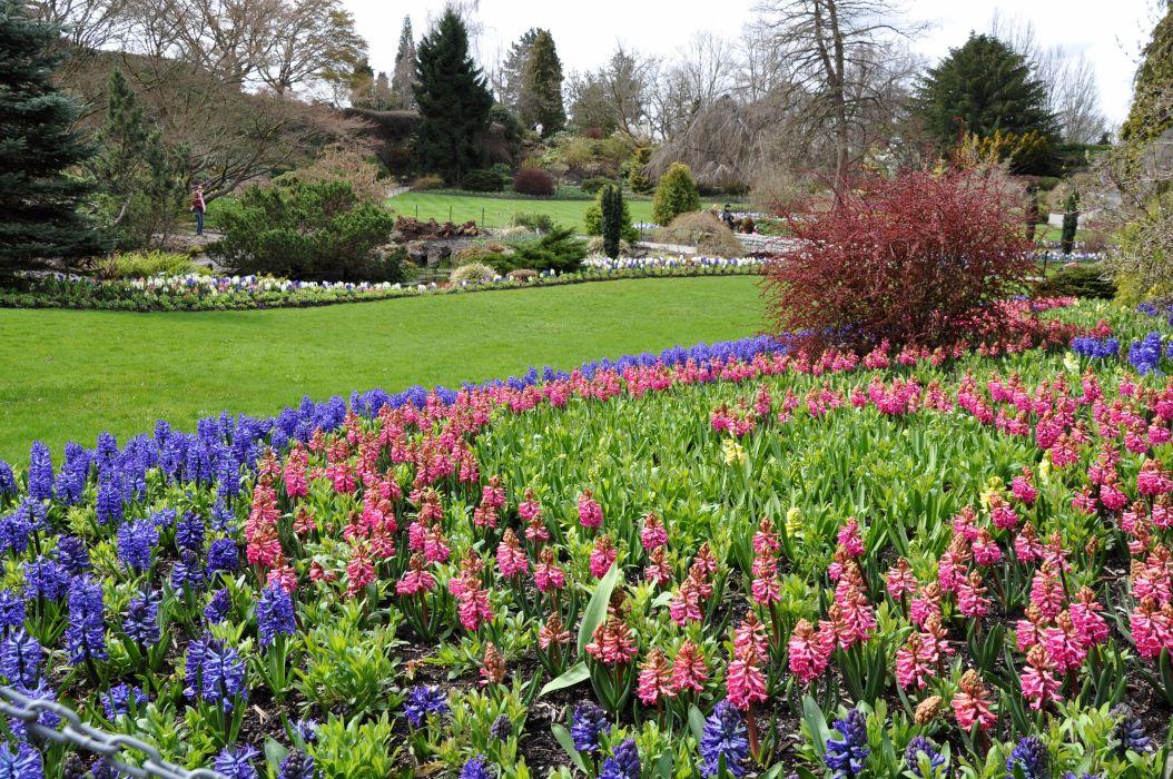 Canada Gardens Hyacinths Vancouver Lawn Queen Elizabeth Garden Nature wallpaper