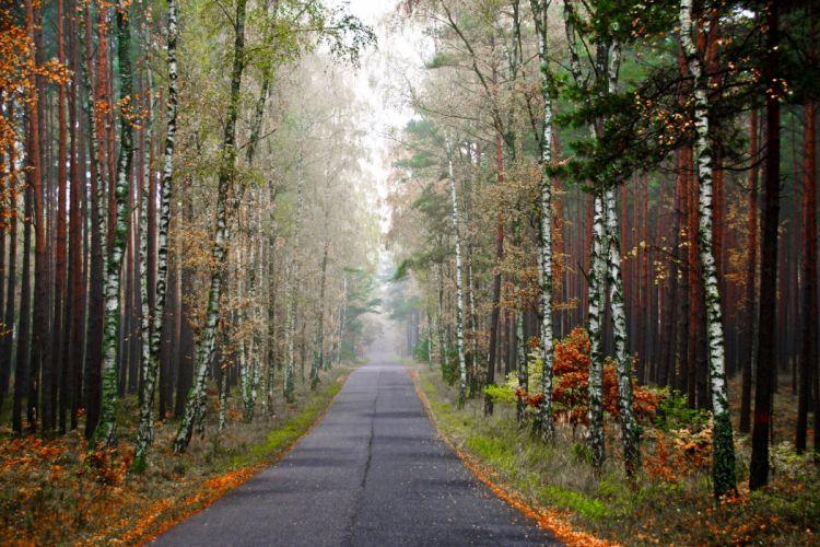 Forests Roads Autumn Birch Fog Nature wallpaper