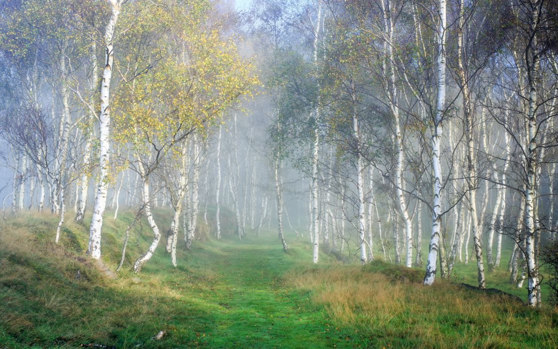 Forests Autumn Birch Grass Fog Trees Nature wallpaper
