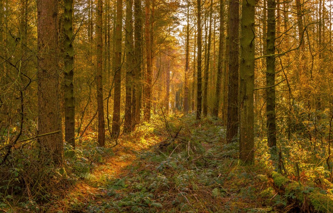 Forests Autumn Trunk tree Grass Trees Nature wallpaper