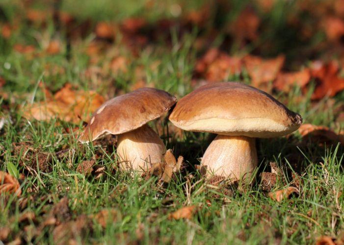 Mushrooms Grass Nature wallpaper