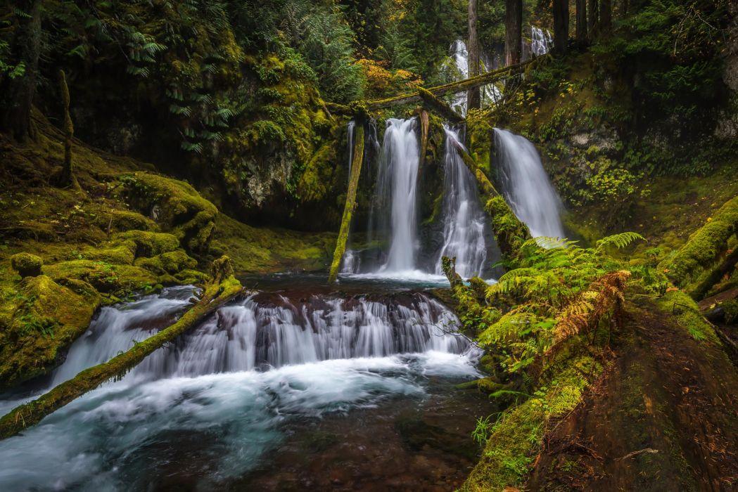 USA Parks Waterfalls Moss Silver Falls State Park Nature wallpaper