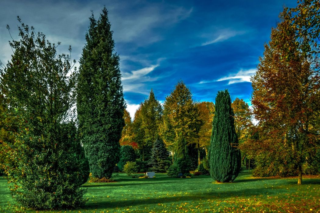 Germany Parks Trees Lawn Attendorn Nature wallpaper