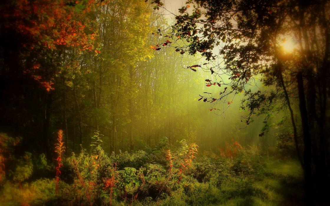 Ireland Forests Fog Trees Monaghan Nature wallpaper