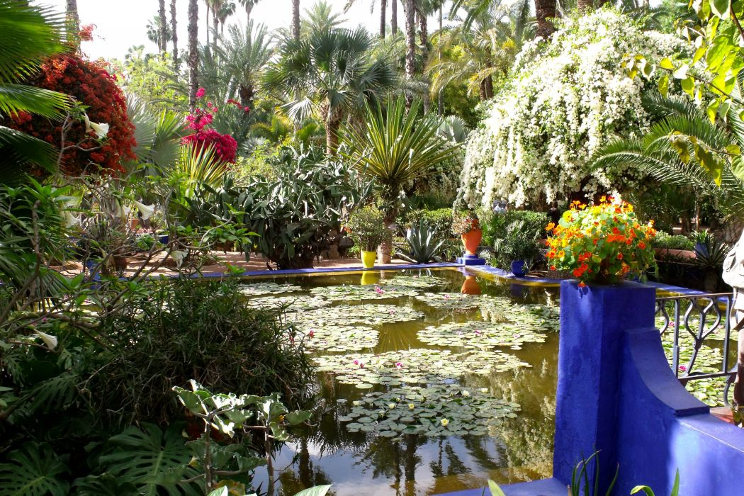 Morocco Gardens Pools Palma Shrubs Jardin Majorelle Marrakech Nature wallpaper