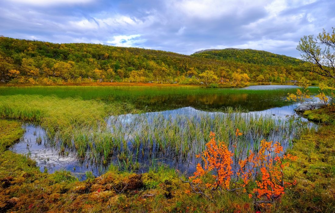 Norway Scenery Rivers Autumn Grass Aunfjellet Nature wallpaper