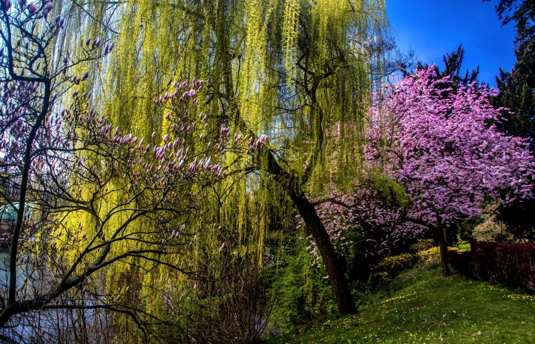 Spring Flowering trees Nature wallpaper