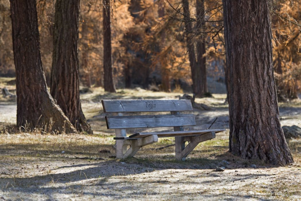 Bench Trees Nature wallpaper