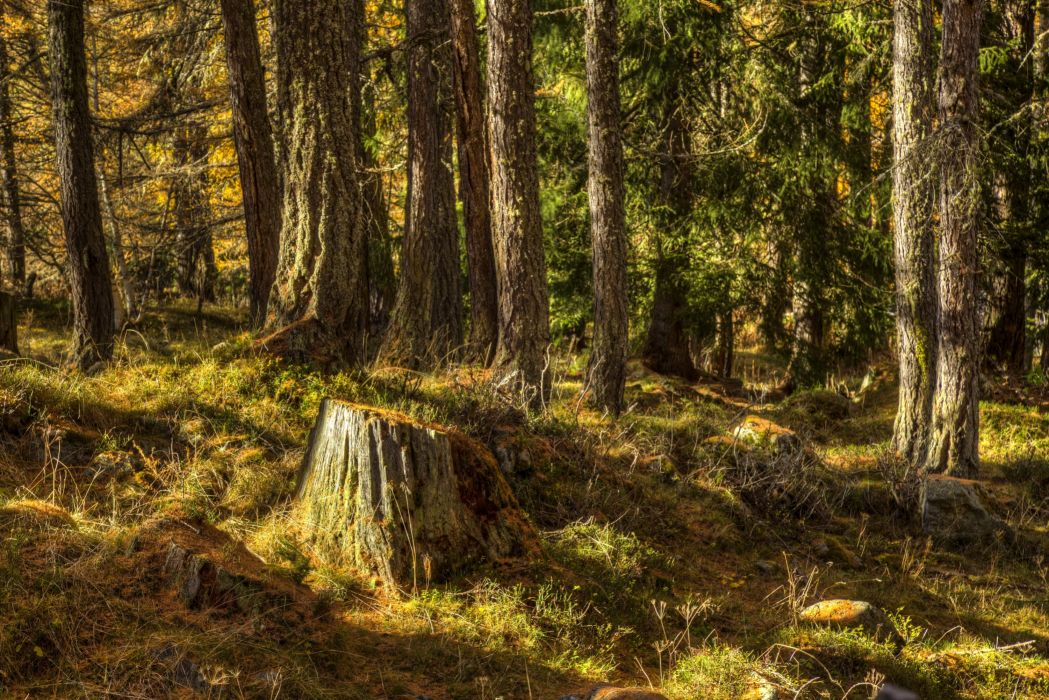 Iceland Forests Tree stump Trunk tree Nature wallpaper