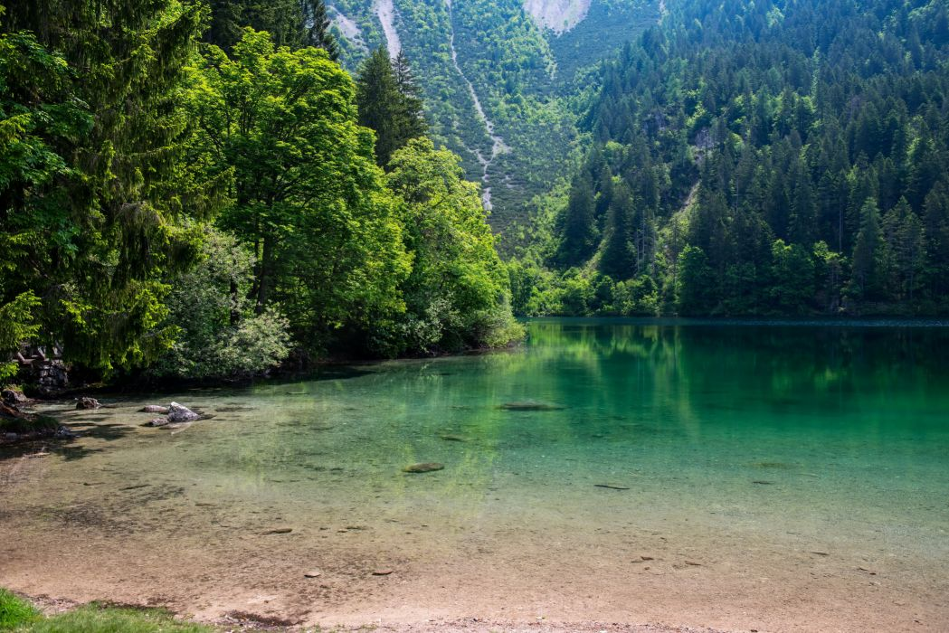Lake Forests Nature wallpaper