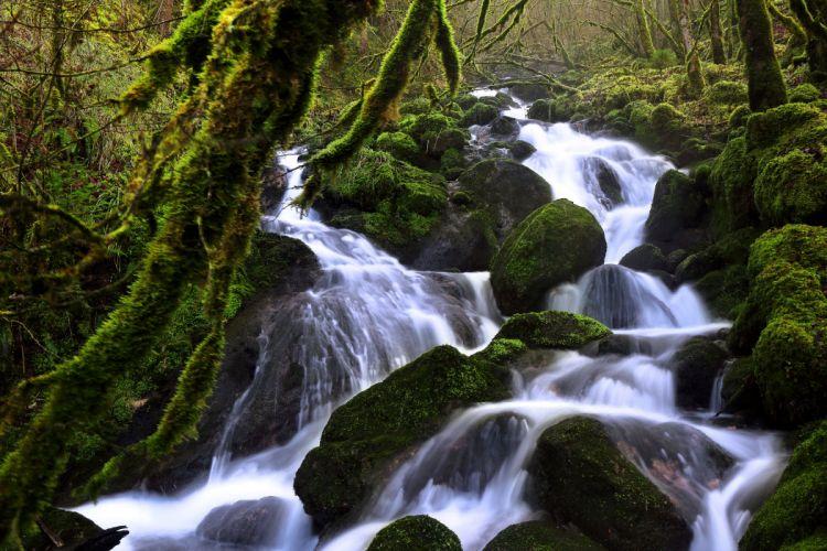 Switzerland Forests Waterfalls Stones Moss Stream Soubey Nature wallpaper