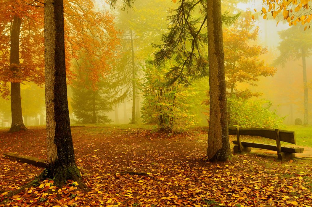 Autumn Trees Bench Nature wallpaper