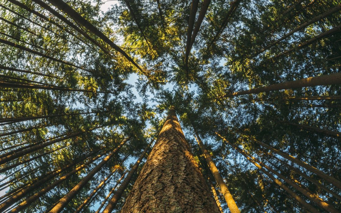 Forests Trunk tree Trees Nature wallpaper