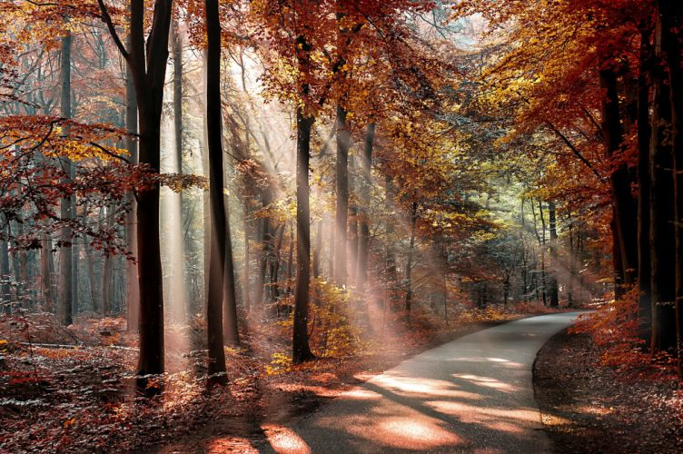 Parks Autumn Trees Rays of light Nature wallpaper