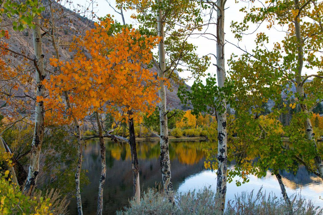 Lake Autumn Birch Trunk tree Nature wallpapers wallpaper