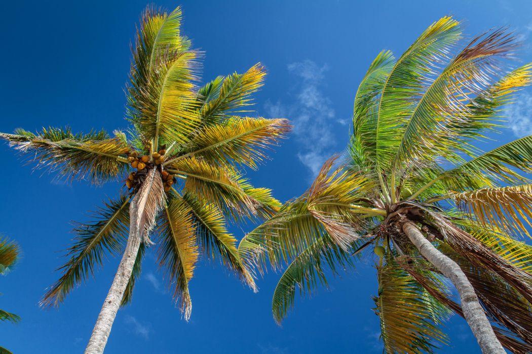 Sky Palma Trees Nature wallpaper