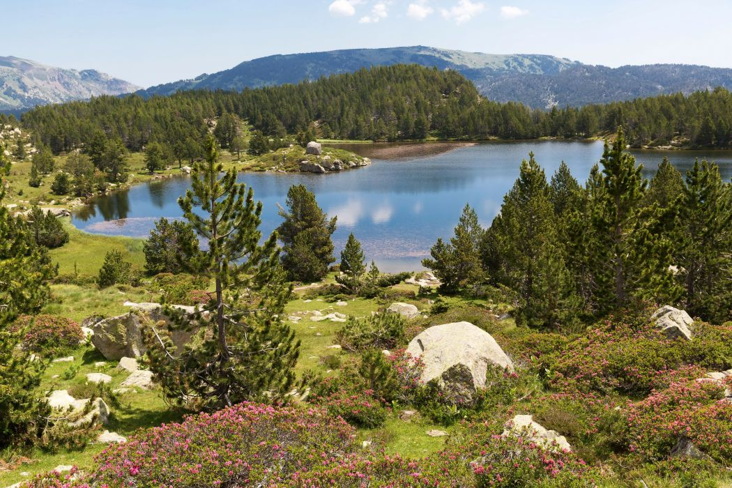 France Scenery Lake Mountains Fir Eastern Pyrenees Nature wallpaper