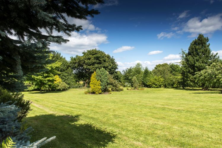 Sky Trees Grass Lawn Nature wallpaper