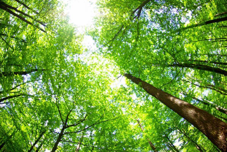 Summer Trees Trunk tree Nature wallpaper