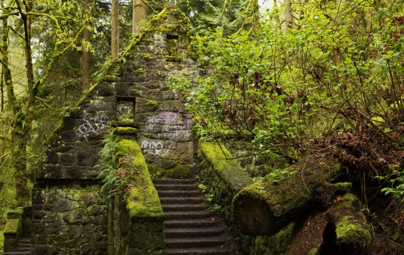 USA Forests Stairs Moss Forest Park Portland Oregon Nature wallpaper