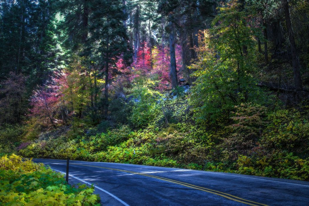 USA Parks Roads Trees Sequoia National Park Nature wallpaper