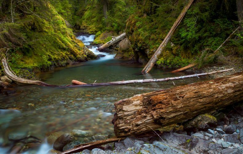 USA Parks Rivers Trunk tree Moss Mt Rainier National Park Nature wallpaper