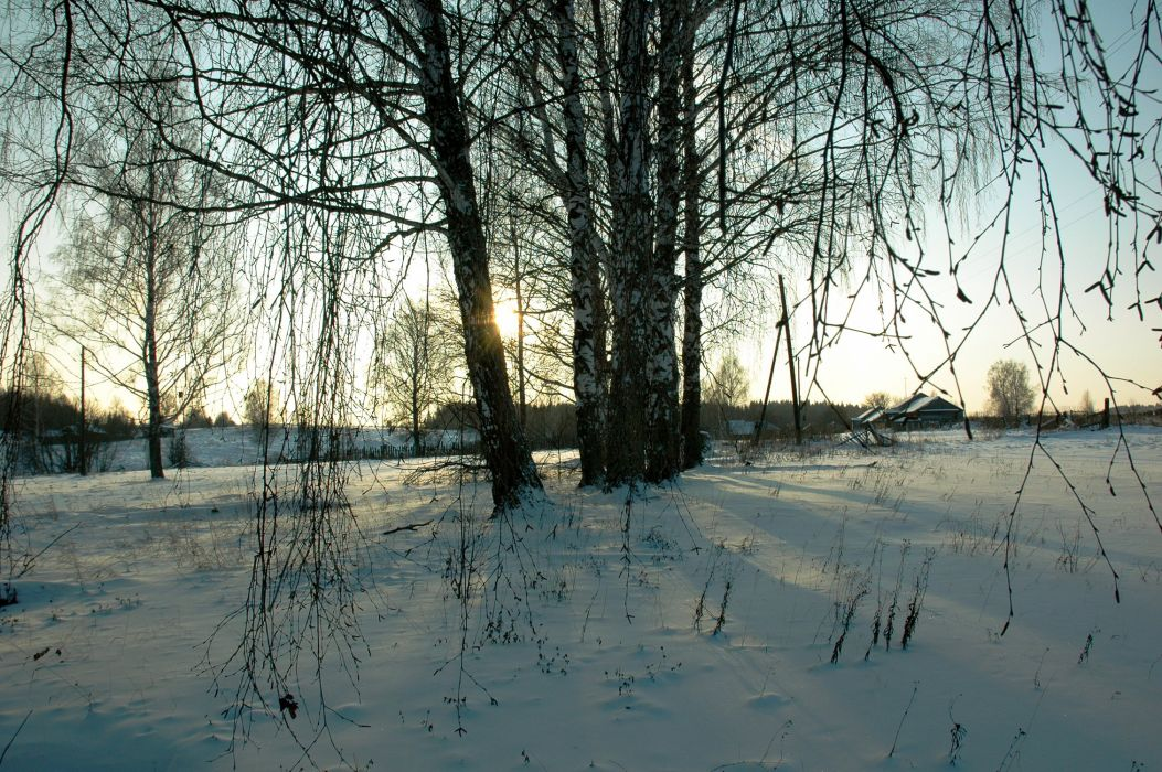 Winter Birch Trees Branches Snow Nature wallpaper