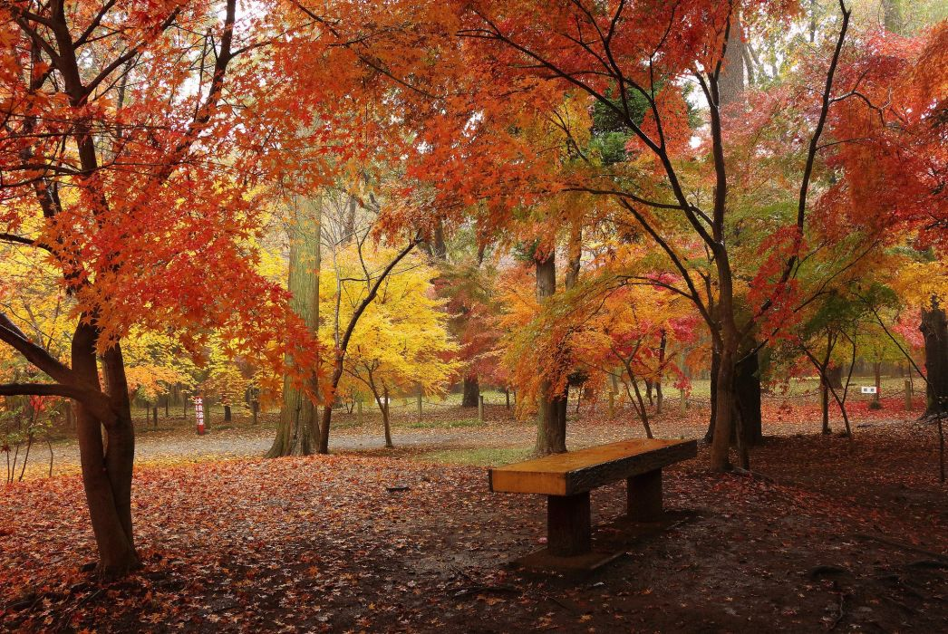 Autumn Parks Trees Nature wallpaper